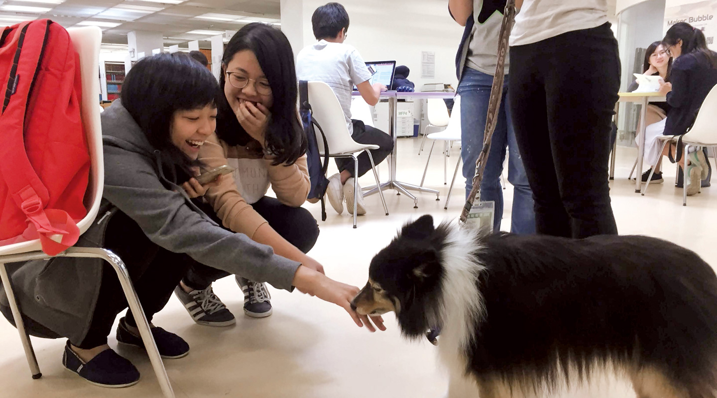 'Dr. Dog' brings joy to students during exam period