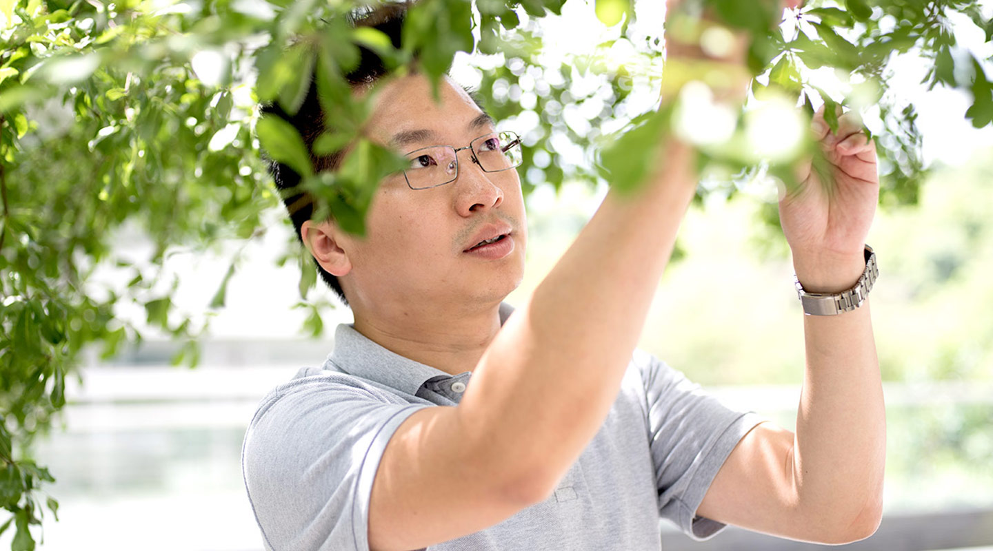 Wong Tak-sing takes his picks from nature <em>(Photo by Eric Sin)</em>