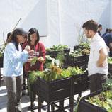 和声书院学生参与天台有机耕种课程,善用空间之余,又学习耕种基本知识,种出既美味又有营养的有机食物。