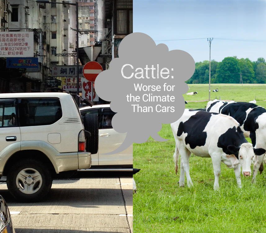 Cattle: Worse for the Climate Than Cars