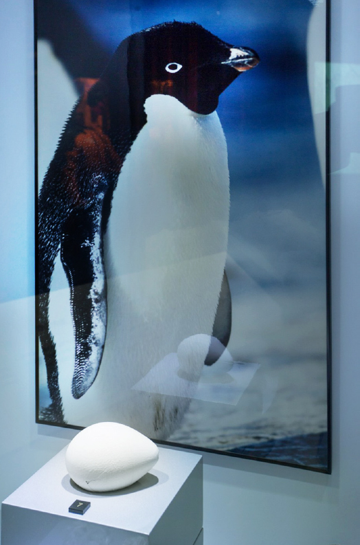 Penguin egg donated by Dr. Lee to the CUHK Museum of Climate Change (Photo by Keith Sin)<br />