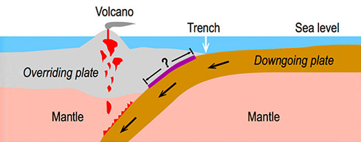 <em>Figure 1: Schematic plot of a subduction zone. The purple line denotes the seismogenic zone where large earthquakes may occur</em>